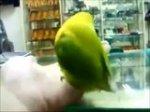 Bacha na to, co slyší Váš papoušek