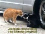 Kočičí dialog (CZ titulky)